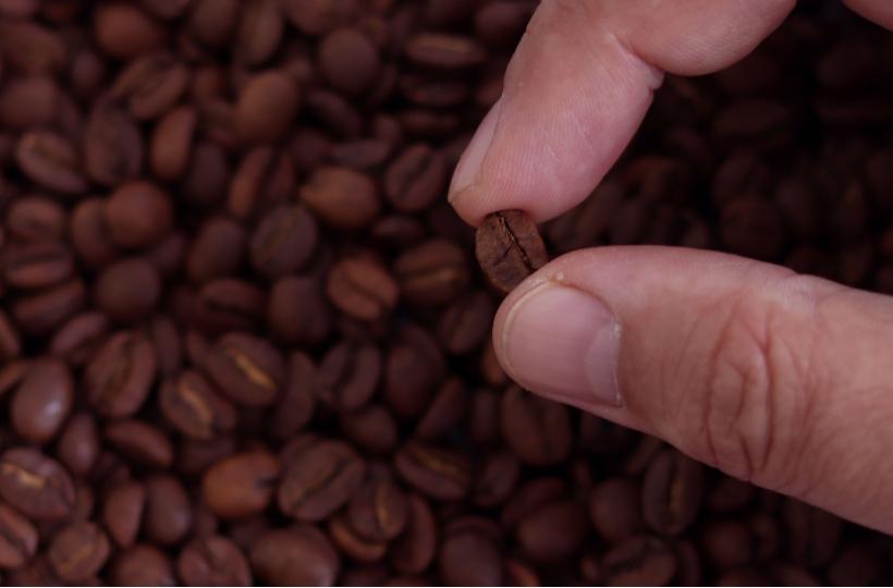 Чем отличаются зерна с матовой поверхностью от зерен с маслянистой?