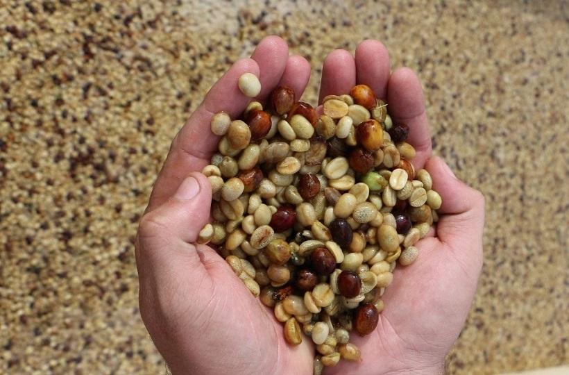 Экспериментальная обработка кофе — чего ждать от вкуса?