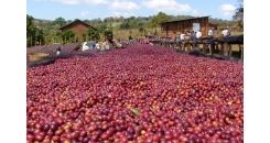 Кофе из Уганды