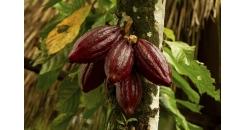 Все, что важно знать о какао и горячем шоколаде