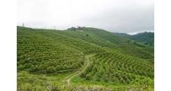 Что такое терруар, и как он влияет на вкус кофе?