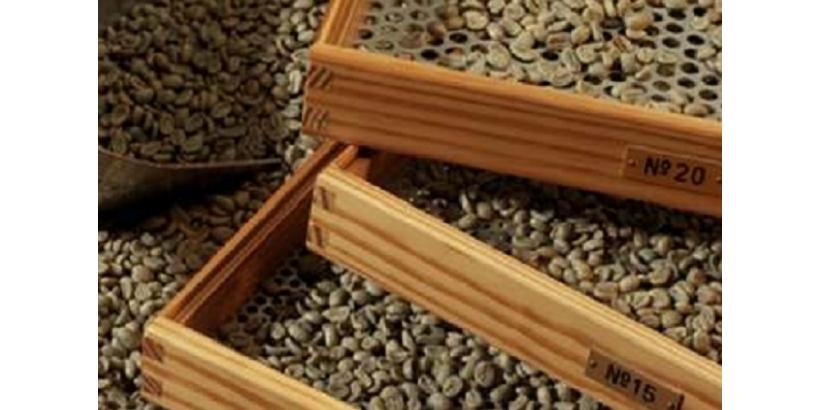 Сорта кофе: как кофе сортируется по размеру
