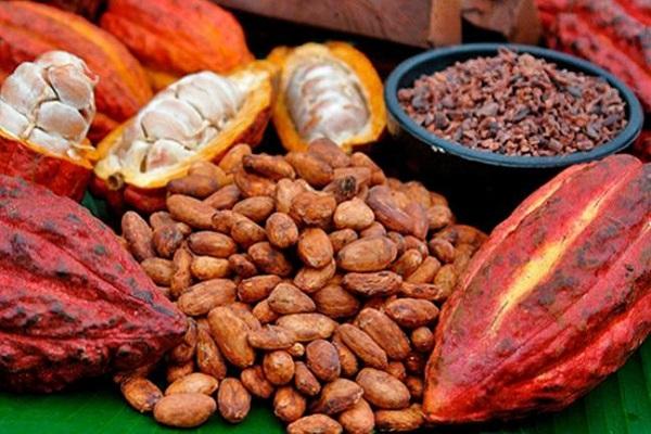 Так выглядит плод дерева какао в разрезе и обжаренные какао-бобы