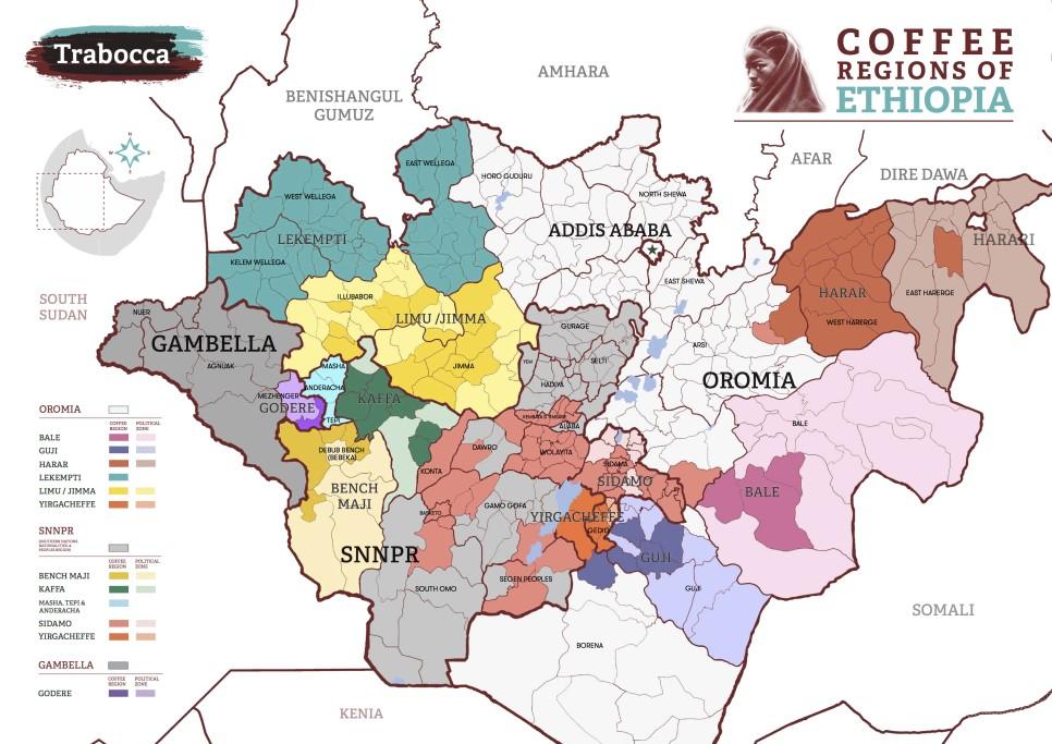 Фото: Карта кофейных регионов Эфиопии